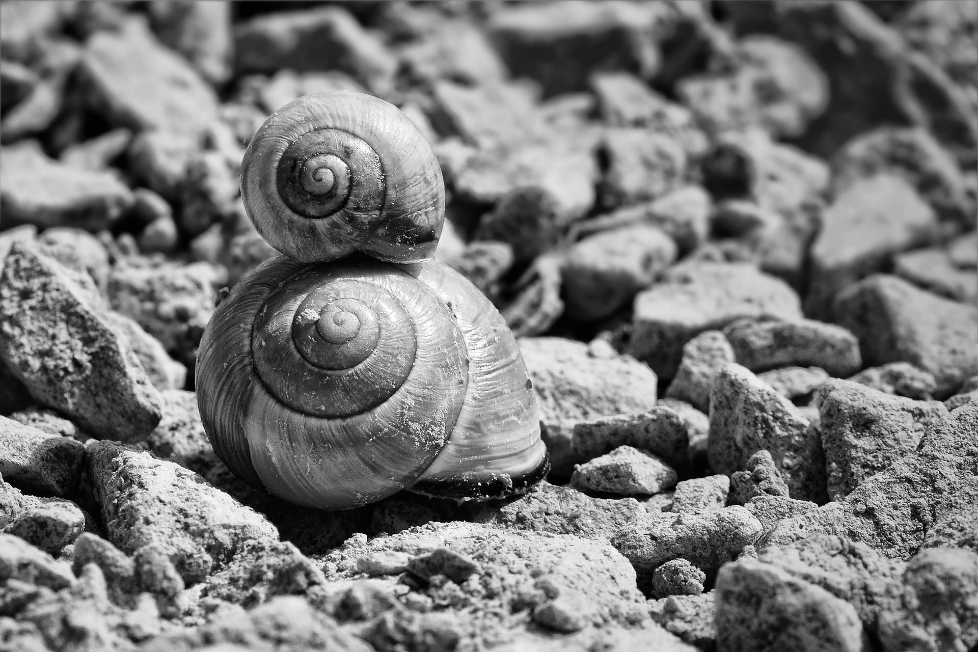 snails-700868_1920