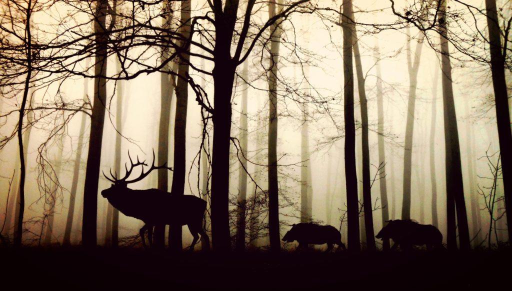 animals-1818690_1920