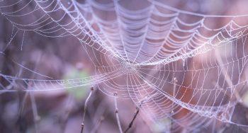 cobweb-1868997_1920